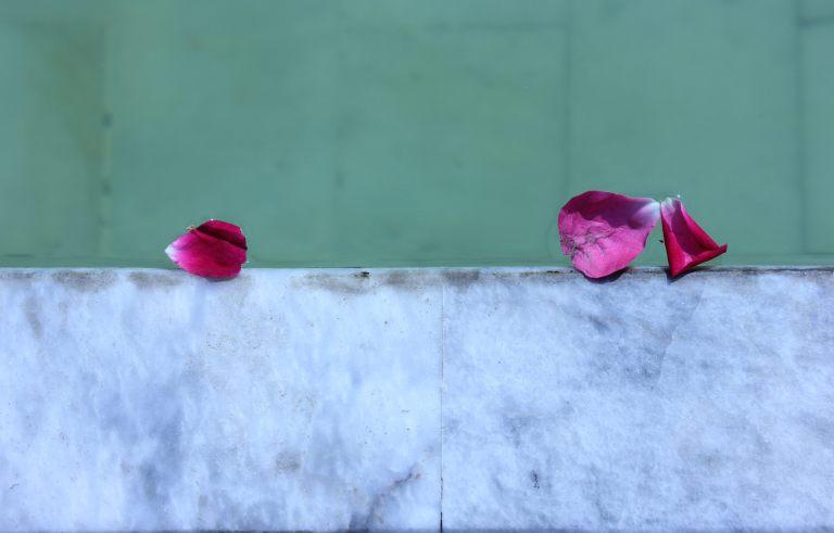 petals wazir khan